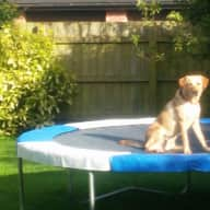 House and pet sitter needed whilst on summer holiday