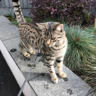 Garden Flat in West Hampstead & our lovely cat need looking after