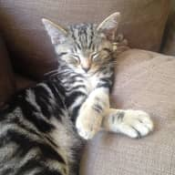 Pet sitter for 2 kittens for 3 days over bank holiday weekend, Brighton