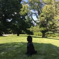 Washington, D.C. Standard Poodle, near Van Ness Metro!