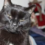 Cat Sitter Needed For June 2017