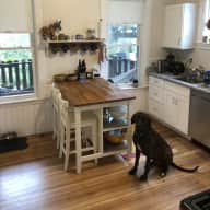 Keep two adorable pups company in trendy Jamaica Plain, MA