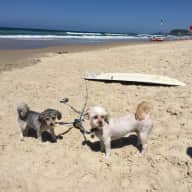 Pet sitter required for 2 fur balls in Mermaid beach apartment.
