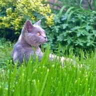 Cat sitter needed 28th April - 2nd May in house just outside historic Winchester