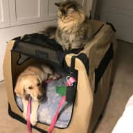 Our puppy and cat need a sitter January 14-29, 2019.