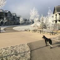 House and dog sit in scenic southern Alberta!