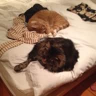 House cat sitter needed for Bethnal Green, E2