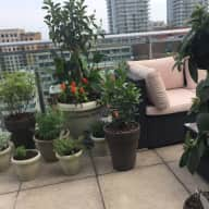 Cat Sitter & Outdoor plant waterer for Yonge & Eg Penthouse