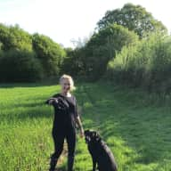 Bertie the Black Lab complete with beautiful home and garden in semi-rural countryside.