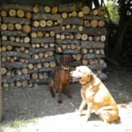 House/pet sitter FOUND for my 2 dogs &  1cat, 10 days in Provence