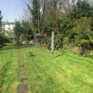 Care for two relatively-independent middle aged cats
