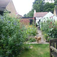 Dog, cat and garden sit in quiet village 40 mins from Cambridge