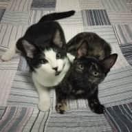 Fun kittens seek house sitter