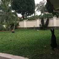 Lovely Snoop Dog and Missy need a sitter. They live in a great house in a quiet suburb in Kuala Lumpur. Ideally suited to a couple of sitters who are used to a big dog.