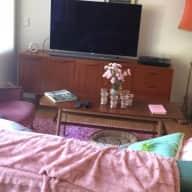 Cat sitting in 1 bedroom Surry Hills apartment