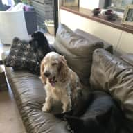 Someone to housesit and care for our four adored dogs in beautiful Burradooo (Bowral) (Billy 11 year old male cocker spaniel, Charlie 9 year old female cocker spaniel and Floyd 9 year old cross mastiff rescue dog)
