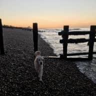 Brighton /Hove: house near beach - lovely dog
