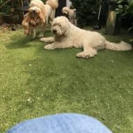 Experienced Pet Sitter wanted for multi-pet household
