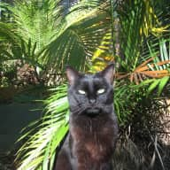 Cat lover wanted for sunny QLD house sit