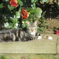 Our lovely tabby in Kingston needs a sitter please!
