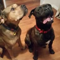 House/Dog sitter require late October