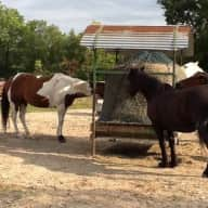 Horses and dog need your company in SW France!