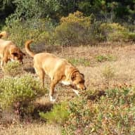 Wendy and Chris plus Bruno and Bella are looking for two house/dogsitters in the sunny Algarve from Monday 27th August to Monday 17th September 2018.  	These dates allow for time to show you all the facilties of the house and locality and for our two large dogs to get to know you both.  We also hope that you will take us to Loulé Station when we leave for our holiday and pick us up from the station during the morning of the 17th September.