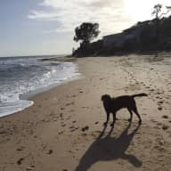 House sitter and pet minder needed for a friendly brown Labrador for the next school holidays and then one week in August from 8th-13th.