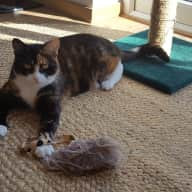 Friendly, reliable person required for cat and house sitting