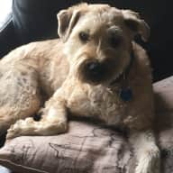 Four day sit with two dogs in NW Calgary July 26-29, 2018