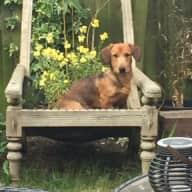 Dog Sitter for Freddie in October 17 - still open