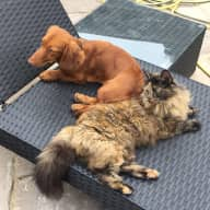 Sausage dog and cat needing love when we're away