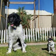 Want to come and enjoy sunny Arizona and our two sweet dogs?