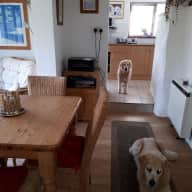 Cornish heaven with gorgeous dogs!