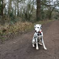 Family home in Tonbridge with Dalmatian