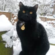 suitable cat sitter for large London house from 17 JUNE 28 JUNE