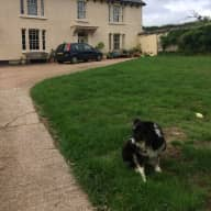 Peaceful farmhouse in the middle of Devon + border collie in need of sitters