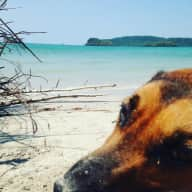 Pet sitter needed for my baby girl  Doudoux in Ao Nang Thailande. Weekends in june + 3 weeks in july
