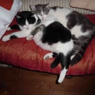 4 cats need cuddles in the South of France over Christmas 2016