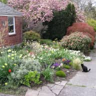 Housesitting a sweet cat in a great location with lovely sunsets & a garden