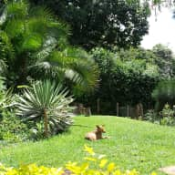 House & pet sitter Nairobi