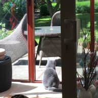 Reliable person to looking after our beloved British Shorthair cats