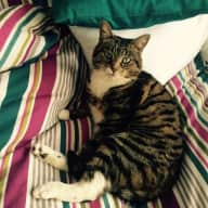 Cat lover wanted to look after a lovely rescue cat in north London