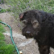 Urgent Housesitter wanted for Digger, and Misty  for Mid March due to housesitter illness