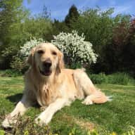 Dog and cat sitter needed - Sussex village of Bolney