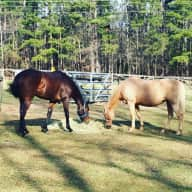 Small Hobby Farm in beautiful town near Atlanta needs a pet lover to come stay