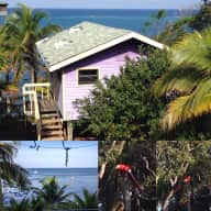 Caribbean Cabin and Two Chilled Cats Need Love and looking after!