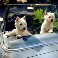 House & Dog Sitter