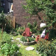 Sitter needed for two cats in beautiful private home in Queens, NYC