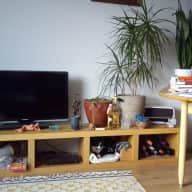 Looking for a house & cat sitter, for june  in Amsterdam